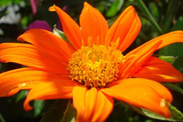 Schwiegermutter sagt ein Garten ohne Farbtupfer ist fade