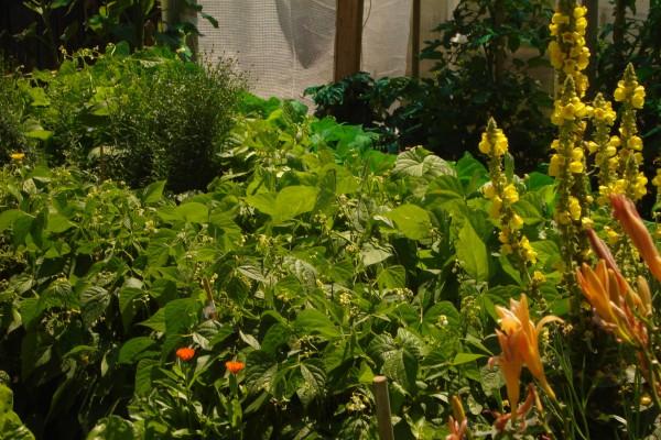 Gemüse aus dem eigenen Garten muss man einfach lieben